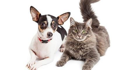 com_gen_5113554_images_n-DOG-CAT-628x314