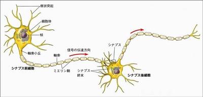 CAMニューロン4