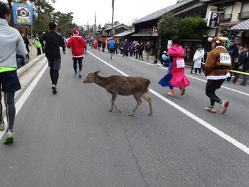 奈良マラソン2014-14
