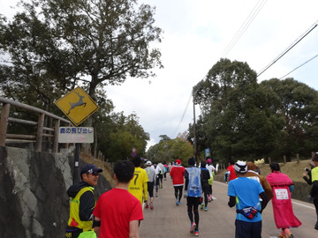 奈良マラソン2014-16