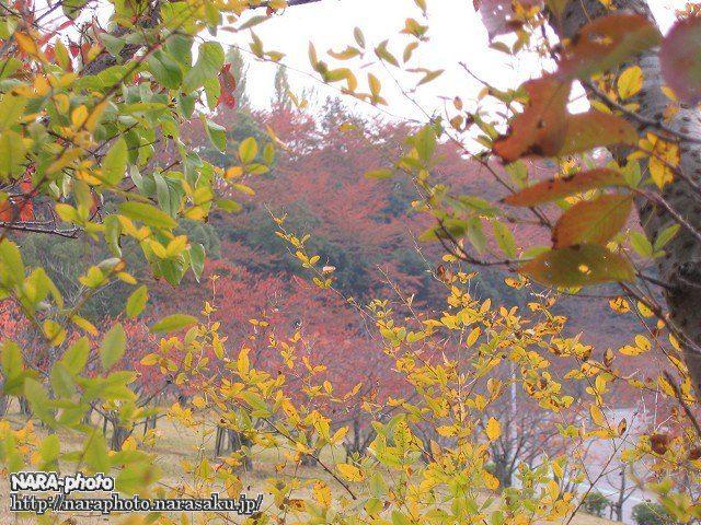 鴻ノ池運動公園の紅葉3