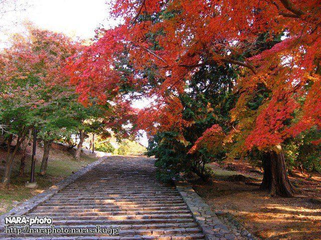 東大寺の紅葉4