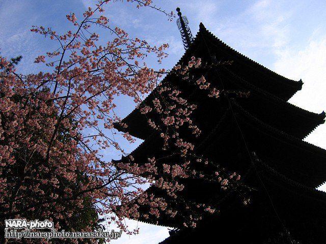 興福寺五重塔と桜