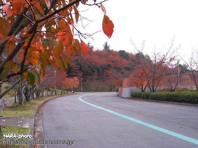 鴻ノ池運動公園の紅葉4
