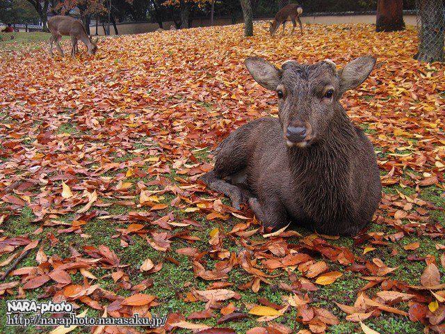 紅葉 with 鹿3