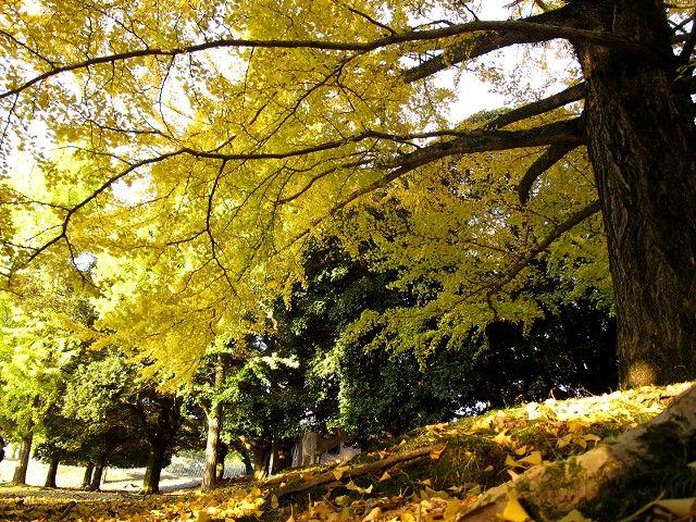 大仏池の紅葉2