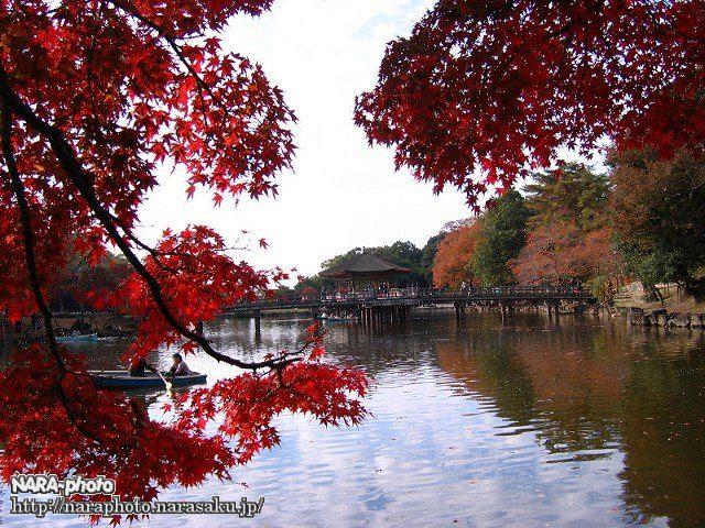 鷺池(浮見堂)4
