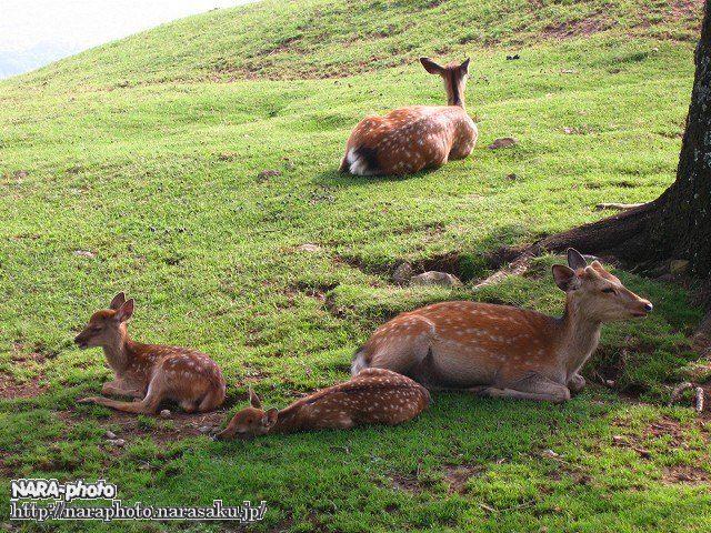 バンビの爆睡1