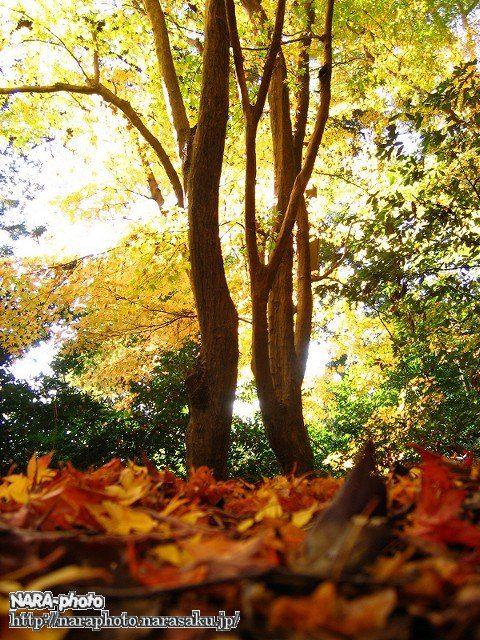 春日山遊歩道の紅葉3