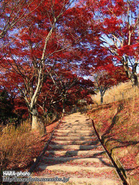 若草山の紅葉1