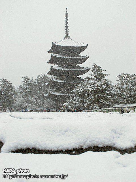 興福寺五重塔1