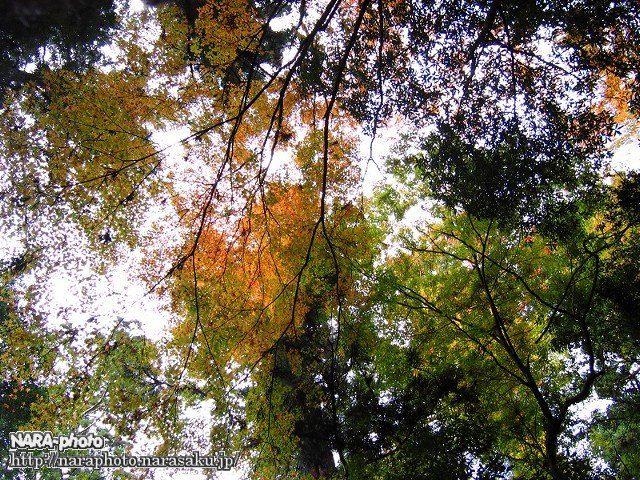 滝坂の道の紅葉3