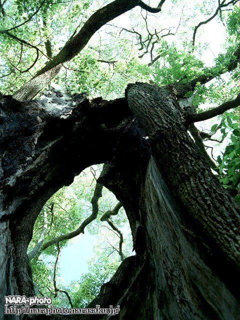 気になる木4