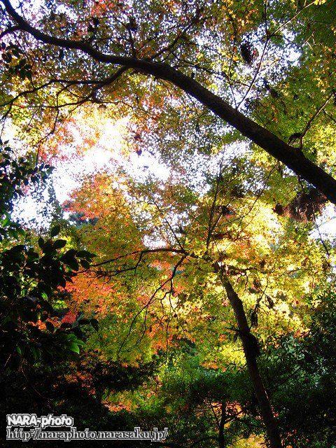 春日山遊歩道の紅葉4