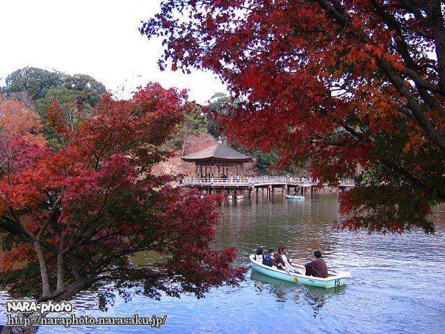 鷺池(浮見堂)3