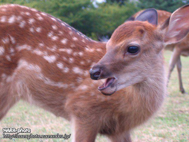バンビと鹿せんべい3
