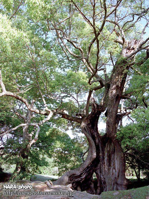 気になる木1