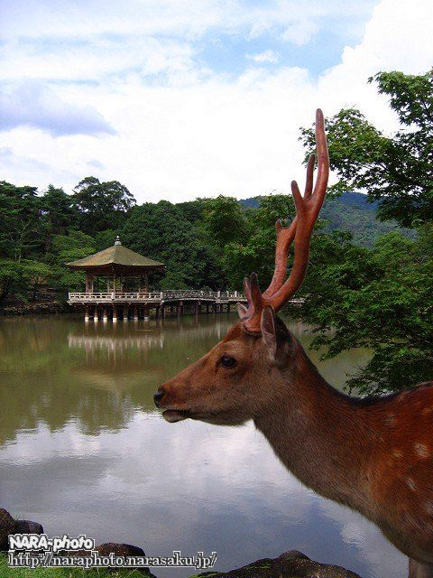 鹿と浮見堂