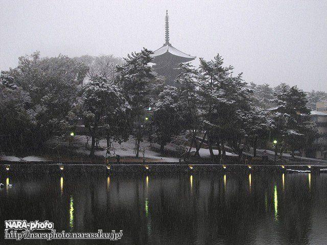 興福寺五重塔3