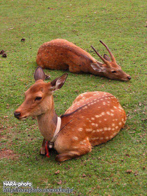 レッド&だらけ鹿