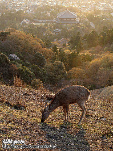 大仏殿と鹿2