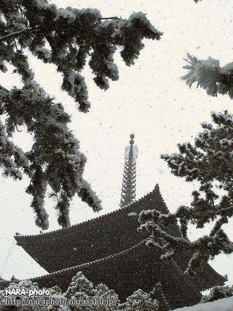 興福寺五重塔2