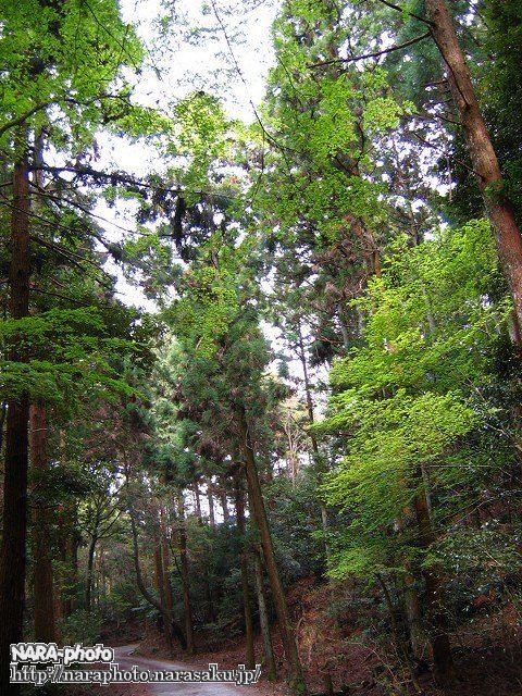 奈良奥山ドライブウェイ1