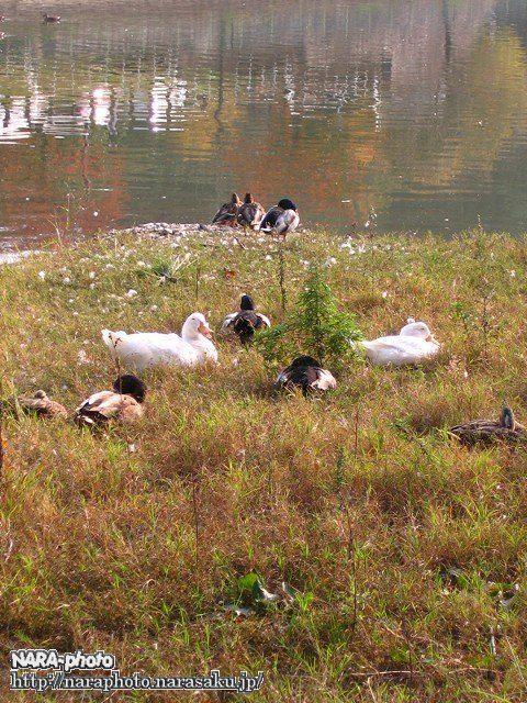 鴻ノ池運動公園の紅葉5