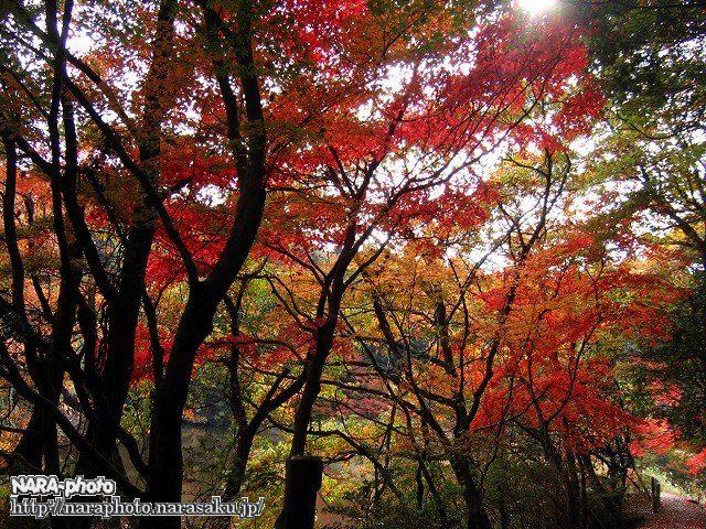 地獄谷新池周辺の紅葉3