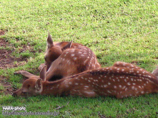 バンビの爆睡2