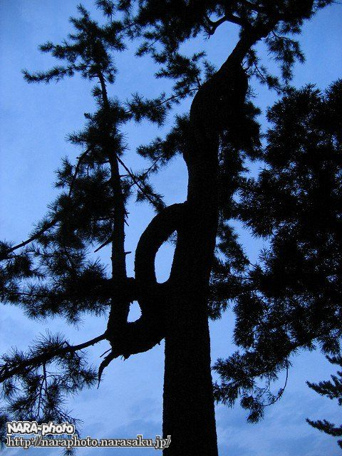 奈良公園・登大路園地の木