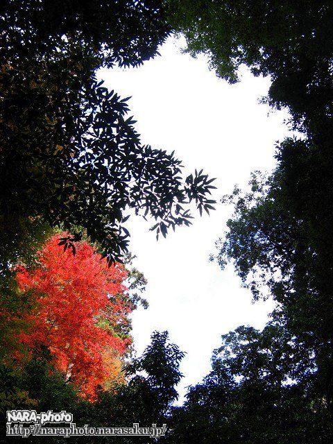 滝坂の道の紅葉2