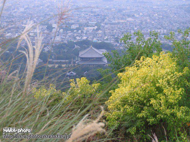 若草山の秋1
