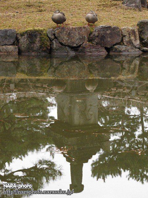 奈良国立博物館・鴨