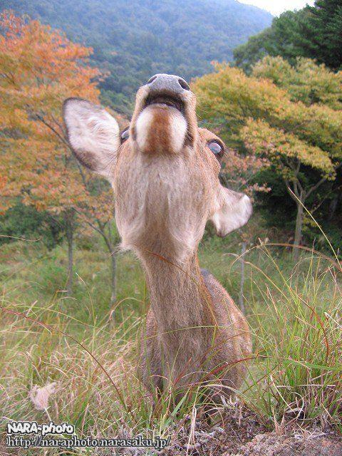 若草山の秋4