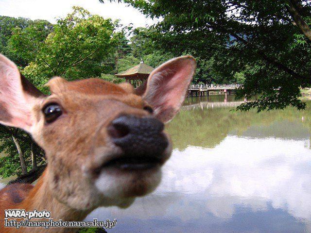 鹿の妨害工作2