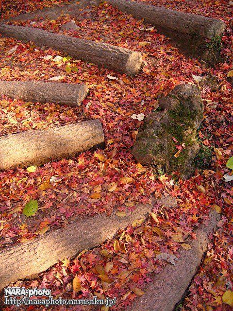 若草山の紅葉4