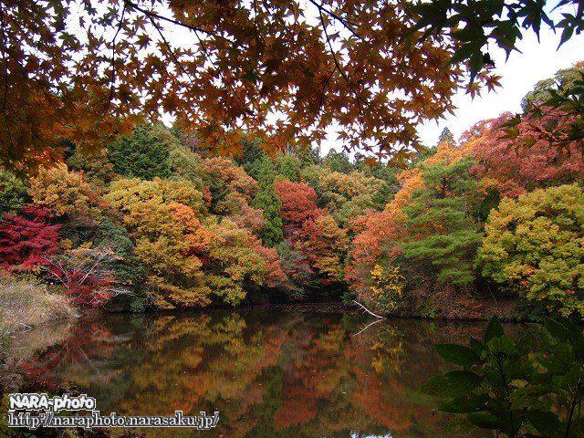 地獄谷新池周辺の紅葉1
