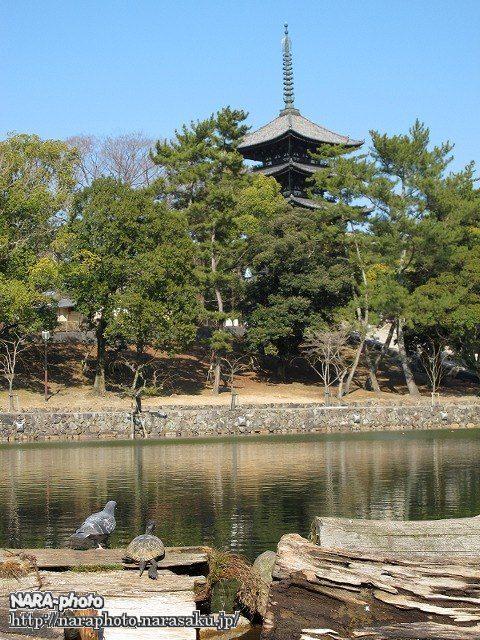 猿沢池・亀・鳩・興福寺五重塔