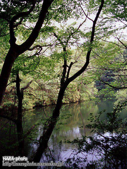 地獄谷園地 新池