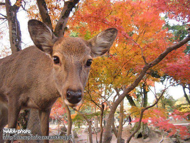 紅葉 with 鹿9