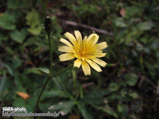 なんかの花2