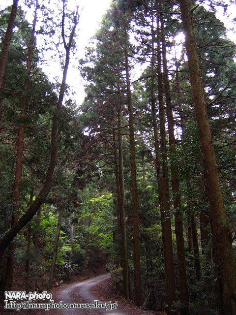奈良奥山ドライブウェイ2