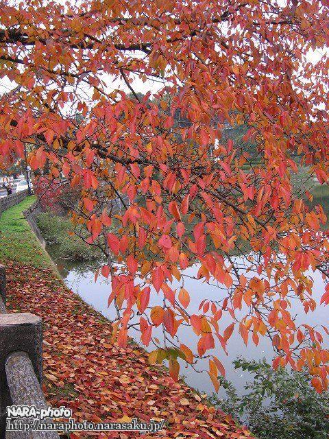 鴻ノ池運動公園の紅葉1
