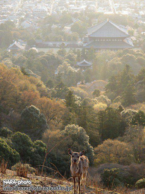 大仏殿と鹿1