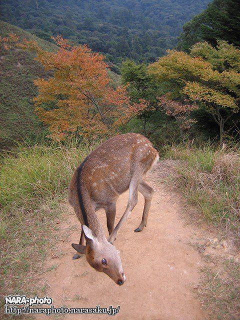 若草山の秋2