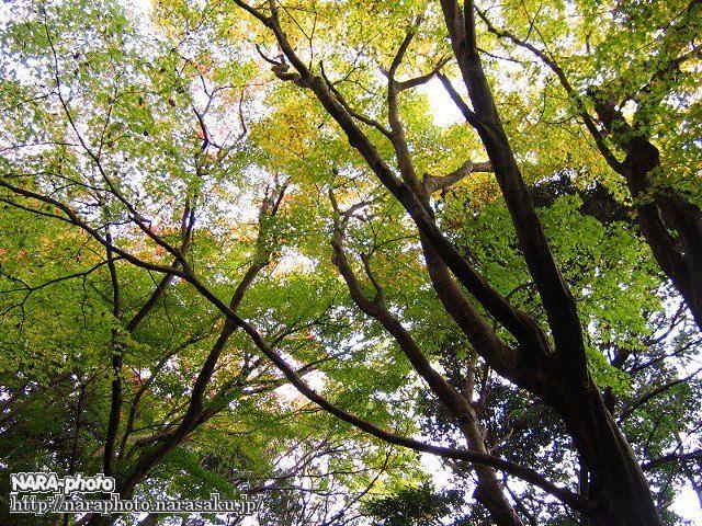 春日山遊歩道の紅葉2