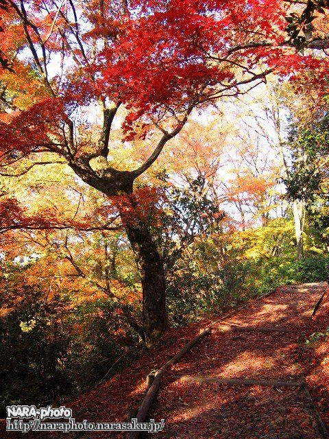若草山の紅葉2