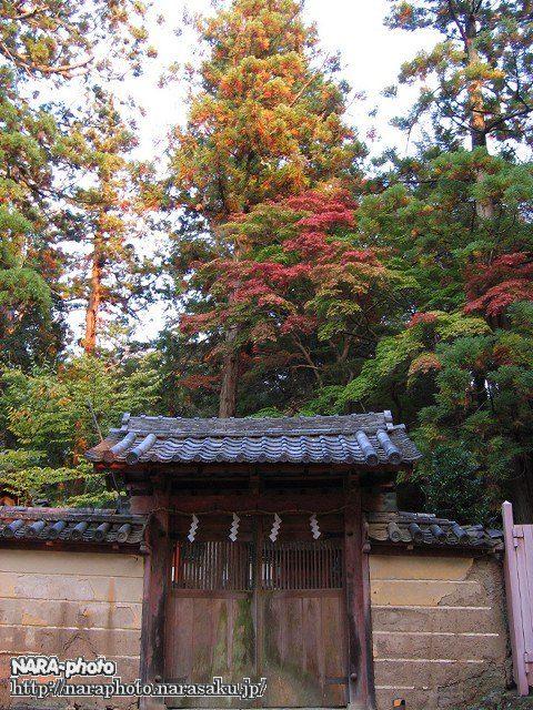 手向山八幡宮の紅葉
