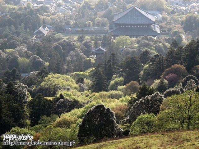 東大寺大仏殿と新緑